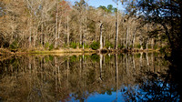Withlacoochee River 12-29-11